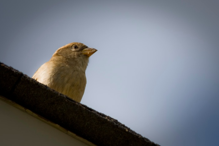 bird-on-the-roof