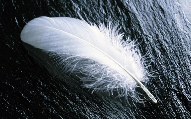 """White Feather"" The Universal Symbol for Cowardice"