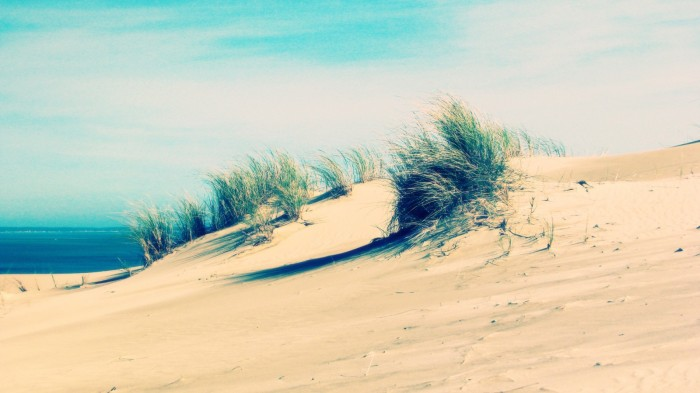 beach-sand-sea-grass