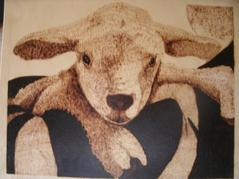sheep-shepherds-shoulder2