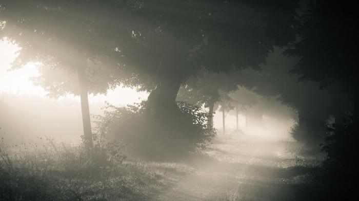 misty-path-232239